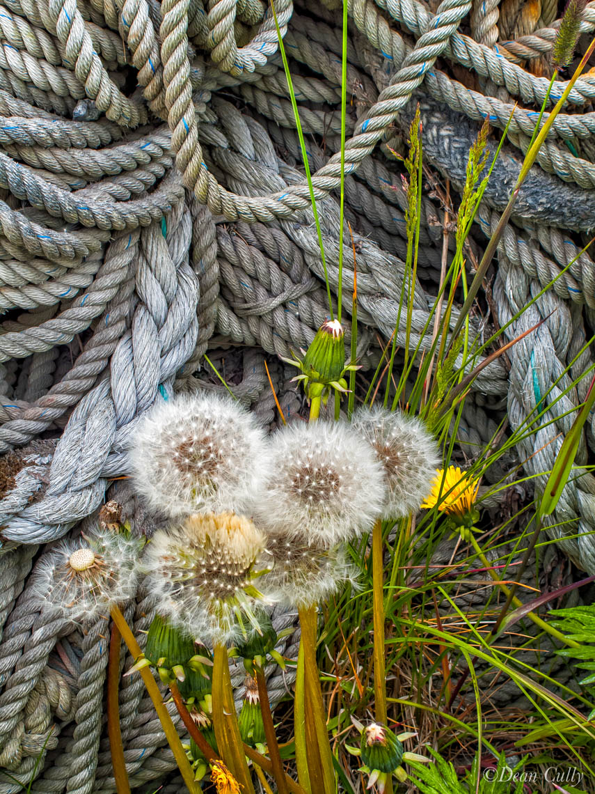 Dutch Harbor: New Dandelions & Old Rope