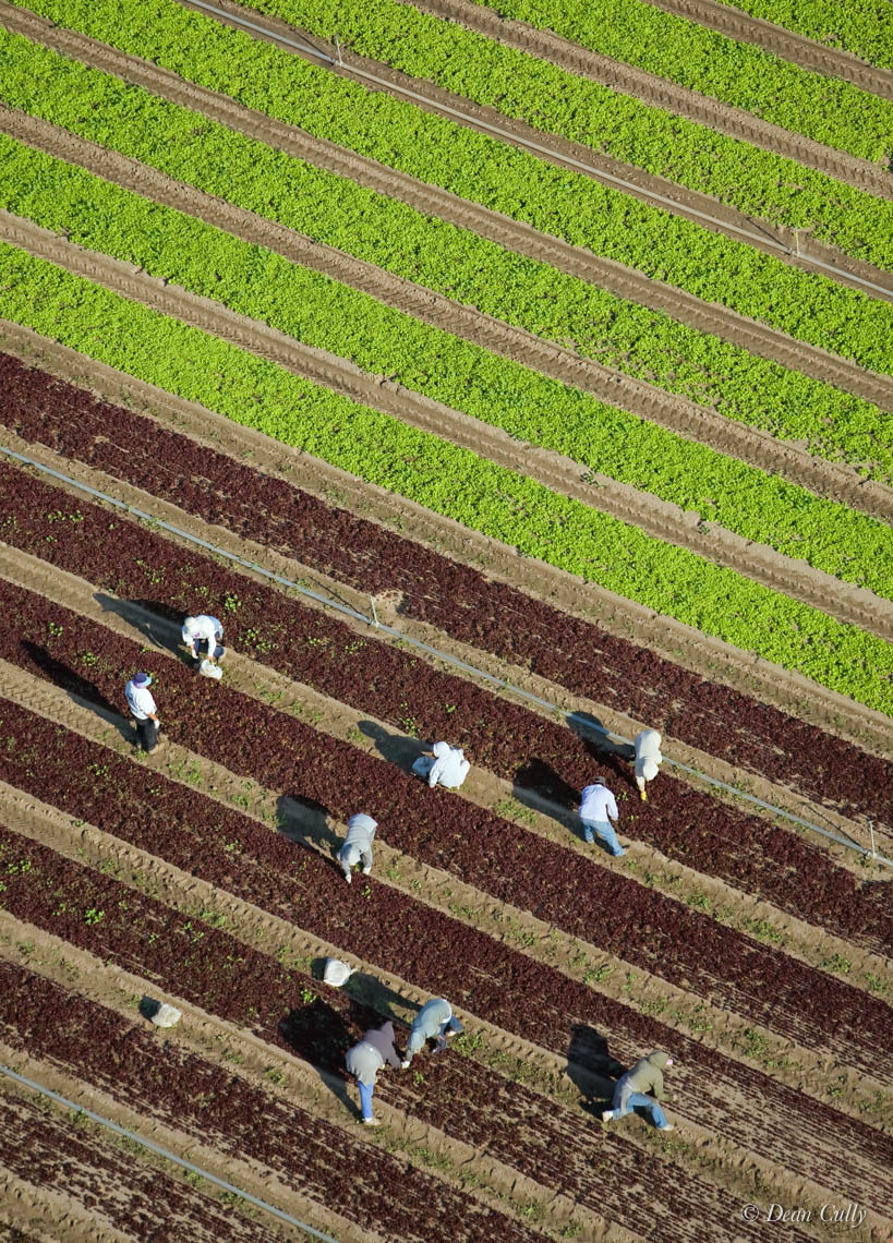 Down on the Farm—agricultural workers maintain a carrot field; San Luis  Obispo County, California
